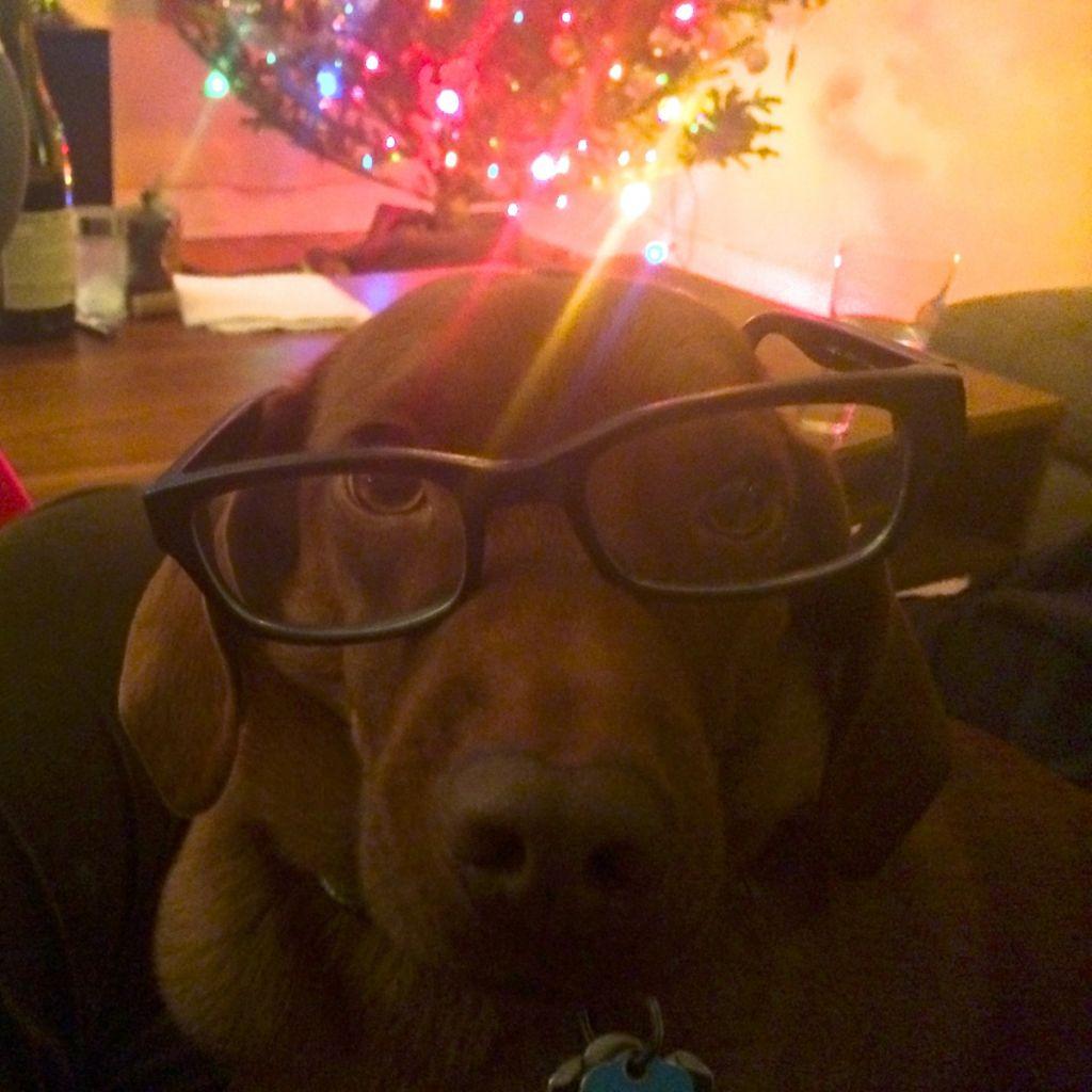 Arya in glasses