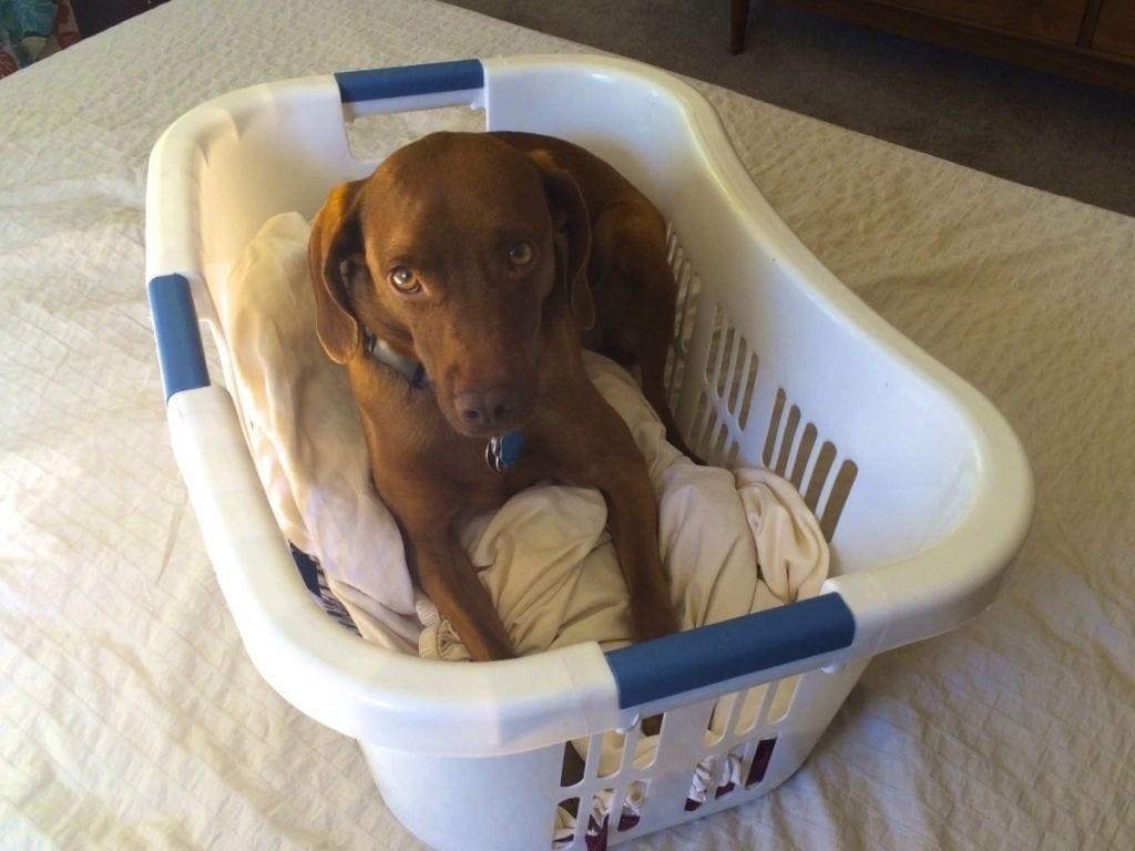 Arya in her laundry basket