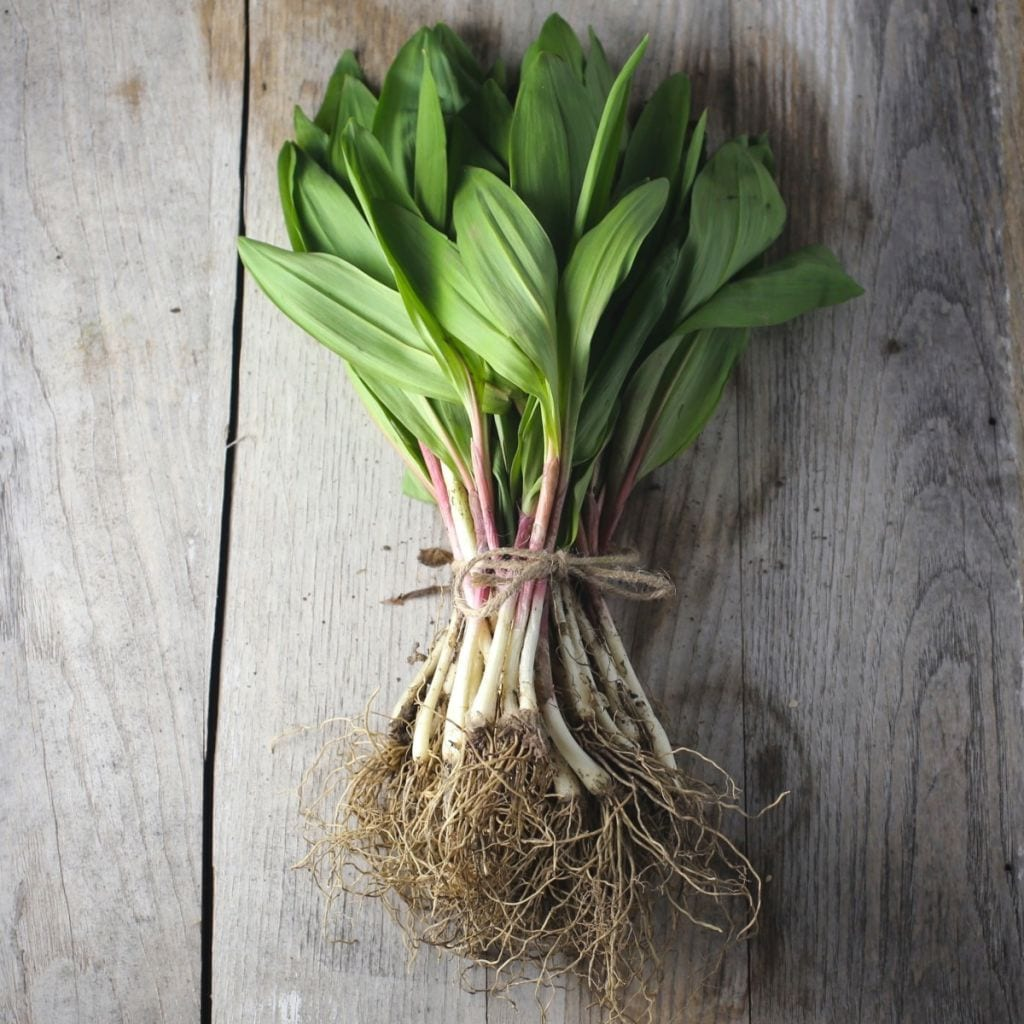 A nice bundle of ramps