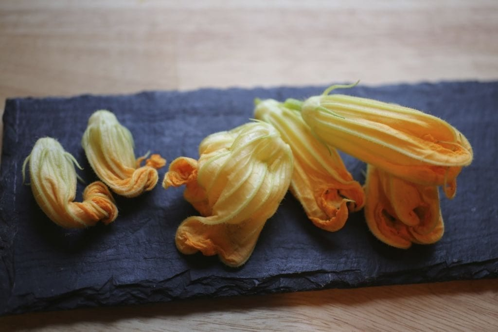 Fresh zucchini blossoms, about to become fried zucchini blossoms
