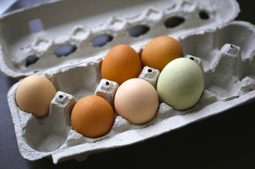 Nerdy chicken eggs