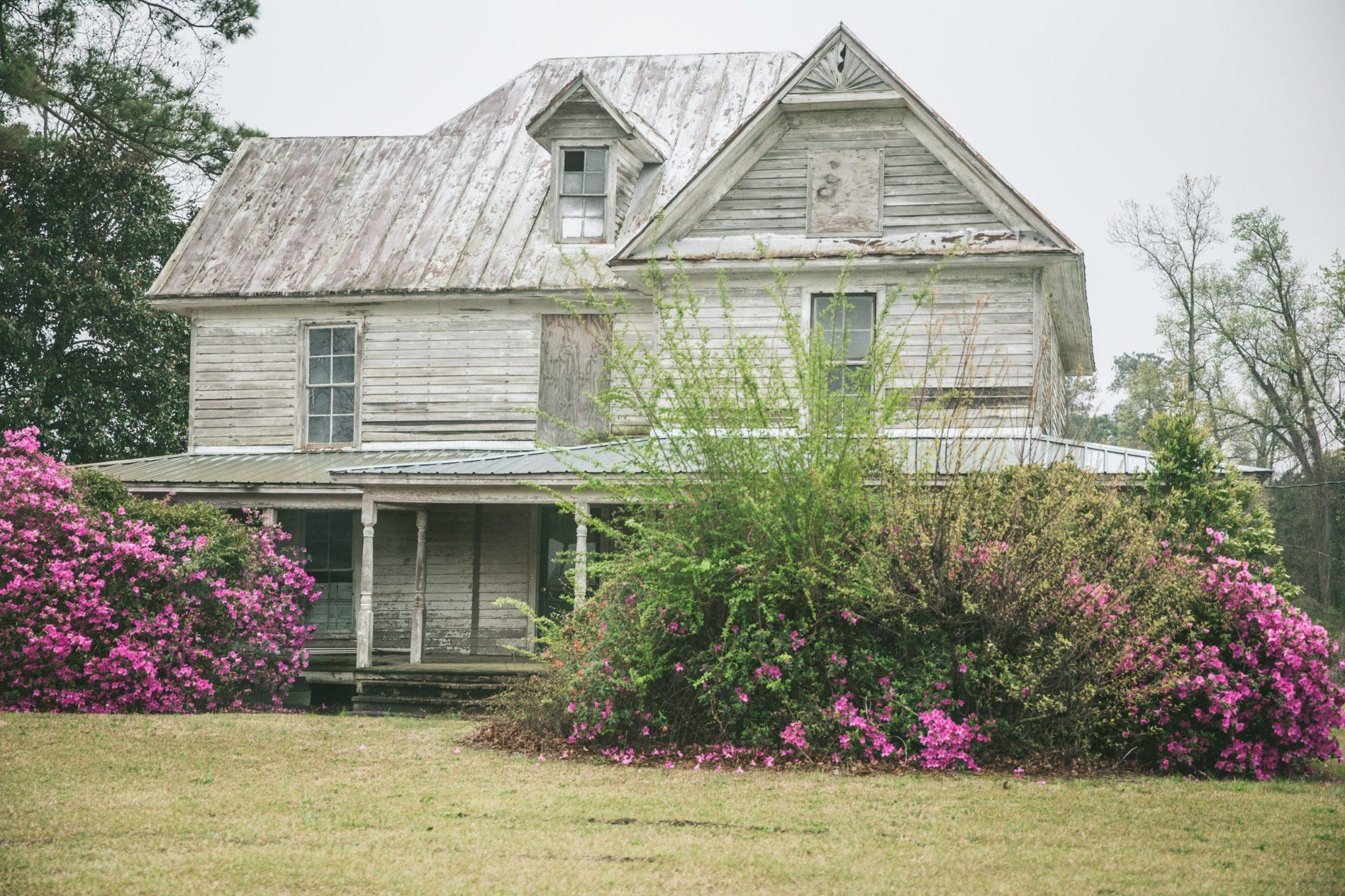 Abandoned farmhouse with beautiful azaleas